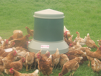 Free Range Poultry Self-Feeder - NEW